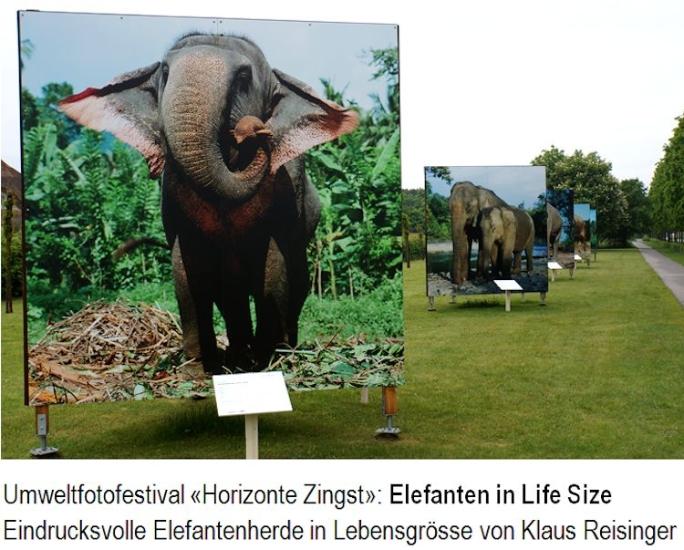 10_elefanten-reisinger