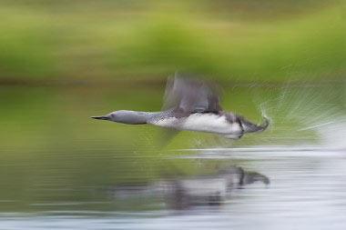 GdT Naturfotograf des Jahres Bild, Winfried Wisniewski
