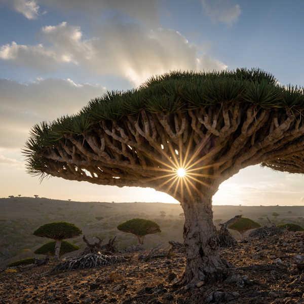 Fotografieren-auf-Socotra